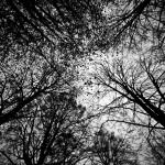 fotowettbewerb_ruhrbarone15