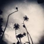 fotowettbewerb_ruhrbarone7