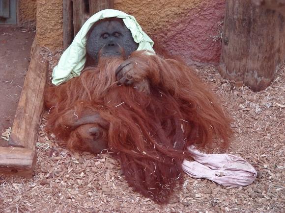 Im Dortmunder Zoo. Foto: Robin Patzwaldt