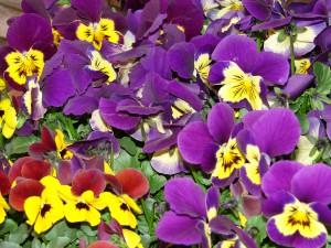Blumen von Maja