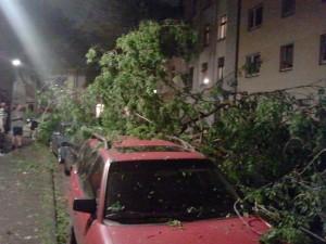 Baum auf Auto in der Speckschweiz