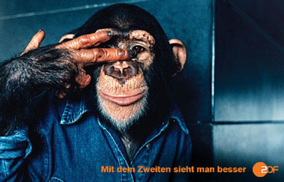 ZDF_affe