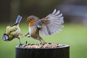 Das Sozialverhalten von PEGIDA-Freunden (Symbolfoto / Quelle: Dierk Schaefer/ Flickr)
