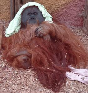 Zoo Dortmund 2012 2 (566x600)