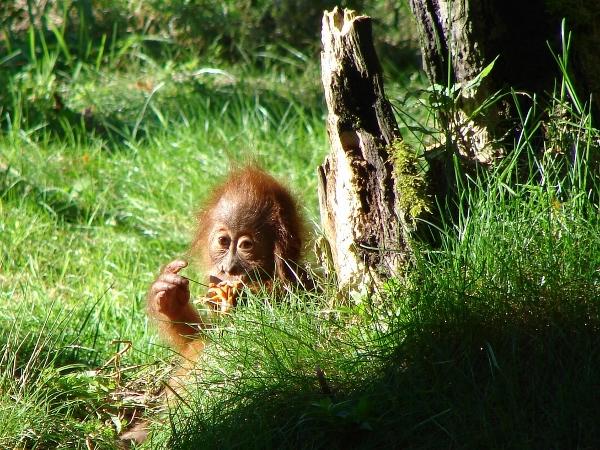 Im Zoo Dortmund 2014. Foto: Robin Patzwaldt