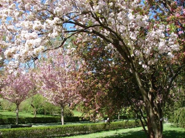 Blütenpracht im Dortmunder 'Rombergpark'. Foto(s): Robin Patzwaldt