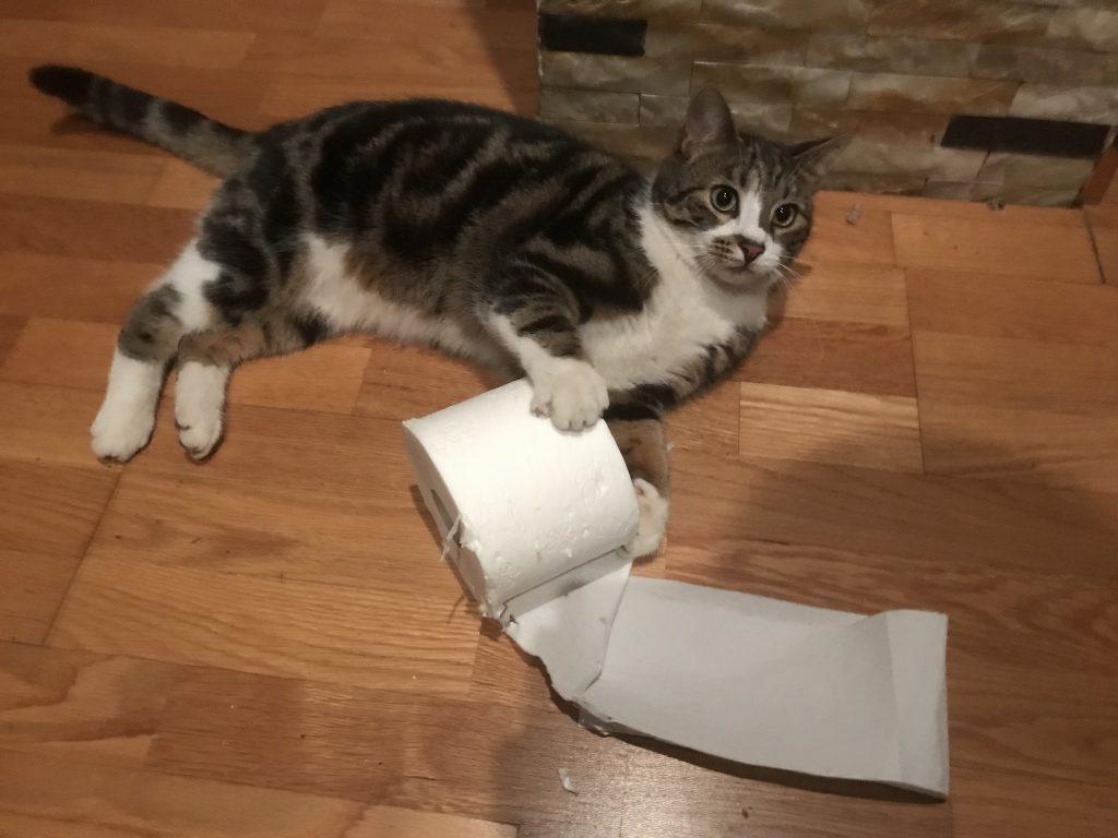 Toilettenpapier Corona Lustig