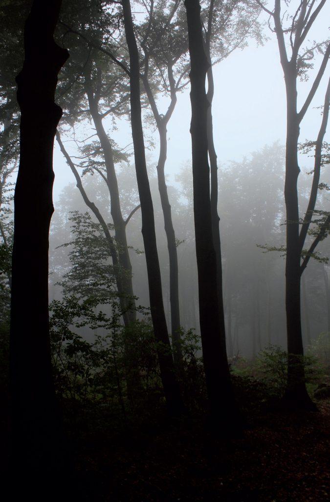 Der Köllnische Wald bei Bottrop; Foto: Fabian Pasalk